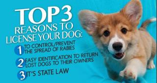 top_three_reasons_to_license_your_dog_large